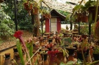 Carnivorous plant shed